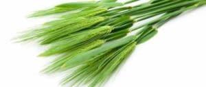zeleny-jecmen-detoxikace