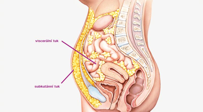 Rozdíl mezi viscerálním a subkutánním tukem