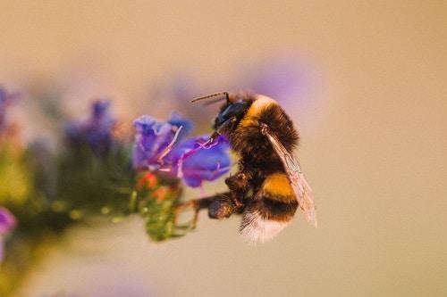 Alfalfa med a hubnutí spolu souvisí, jelikož podporuje střevní bakterie, čímž zlepšuje trávení.