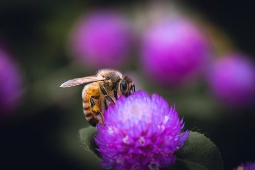 Při dietě zvolte jetelový med a hubnutí bude hned o moc příjemnější.