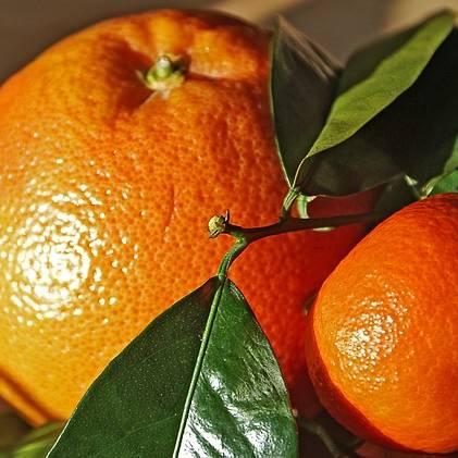 Hořký pomeranč