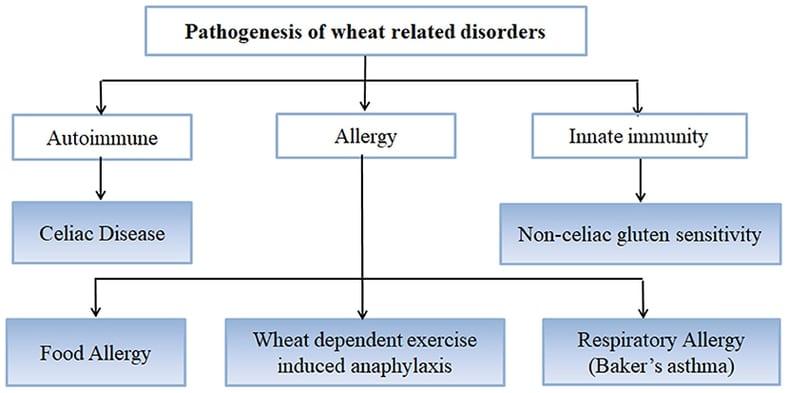 Tabulka vykreslující původ a důvody některých nemocí a poruch spojených s lepkem